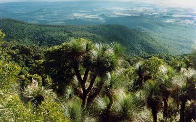 Explore the Bunya Mountains