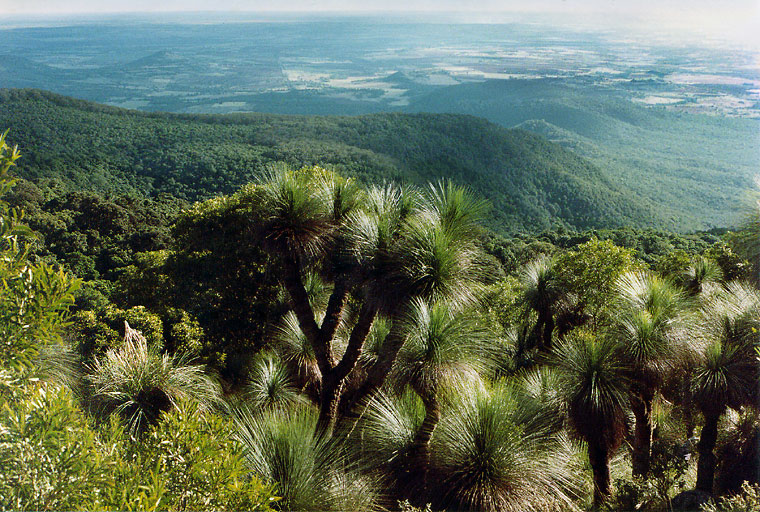 Explore the Bunya Mountains